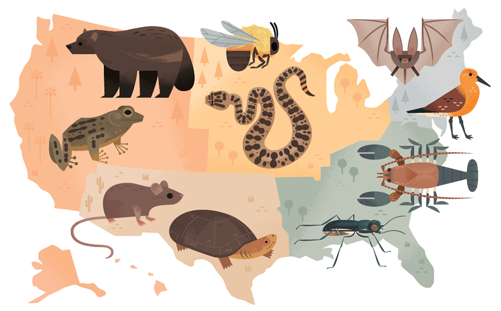 Do Animals Outnumber Humans ? | Know-It-All |Endangered Animals Map